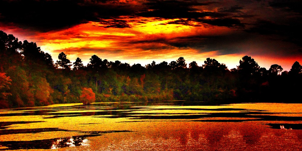 Tattnall Sunset